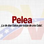 Significado de la palabra Pelea